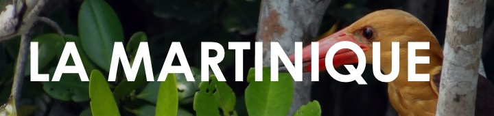 Martinique-que-faire-ou-partir-quand-aout-juillet-echange-maison-pas-cher-bon-plan-caraibes-vacances-ete